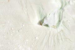Rifiuti lavati su sulla spiaggia di sabbia bianca Fotografie Stock