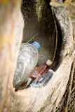 rifiuti nella cavità vuota di un albero la natura perisce concetto di protezione di natura, ecologia La plastica imbottiglia la f fotografie stock libere da diritti
