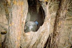 rifiuti nella cavit? vuota di un albero la natura perisce concetto di protezione di natura, ecologia La plastica imbottiglia la f fotografie stock