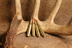 270 rifle ammunition. With whitetail deer horns on a blanket of tanned buck deer hide Stock Photos