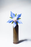 Rifle bullet with a flower. Rifle bullet with a blue flower Royalty Free Stock Photography