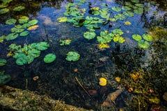 Riflessione in acqua Fotografie Stock Libere da Diritti