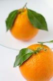 Riflessione arancio Immagini Stock