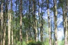 Riflessione astratta degli alberi forestali in acqua Fotografia Stock Libera da Diritti
