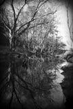 Riflessione in bianco e nero fotografie stock libere da diritti