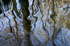 Riflessione degli alberi Fotografia Stock
