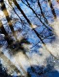 Riflessione degli alberi Fotografia Stock Libera da Diritti