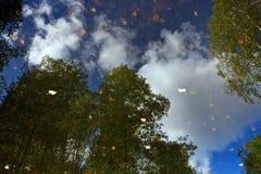 Riflessione degli alberi in acqua Immagini Stock