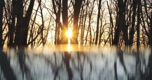 Riflessione degli alberi asciutti nella sera contro lo sfondo del sole archivi video