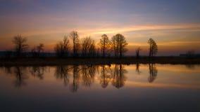 Riflessione degli alberi dal fiume di Narew Fotografie Stock