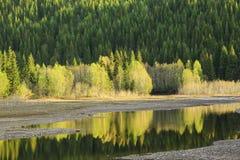 Riflessione degli alberi nel fiume Fotografie Stock