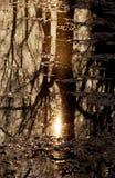 Riflessione degli alberi nel lago immagine stock libera da diritti