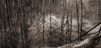 Riflessione degli alberi nel lago Immagine Stock
