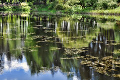 Riflessione degli alberi nel lago Fotografia Stock