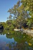 Riflessione degli alberi nel lago Karavomilos, Kefalonia, Grecia Fotografia Stock Libera da Diritti