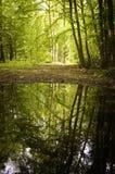 Riflessione degli alberi in un lago da una foresta immagini stock