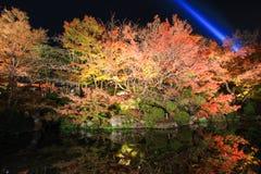 Riflessione degli alberi vibranti Immagini Stock Libere da Diritti