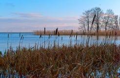 Riflessione degli arbusti nell'acqua, regione paludosa, banche invase dei corpi dell'acqua fotografia stock libera da diritti