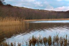 Riflessione degli arbusti nell'acqua, regione paludosa, banche invase dei corpi dell'acqua immagini stock libere da diritti