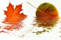 Riflessione dei fogli di autunno. Fotografia Stock
