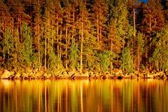 Riflessione dei pini in acqua al tramonto Fotografia Stock Libera da Diritti
