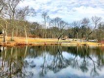 Riflessione dei rami di alberi sull'acqua Immagine Stock