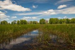 Riflessione del cielo in acqua in una palude fotografia stock