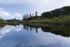 Riflessione del cielo e degli alberi su un lago Immagini Stock Libere da Diritti