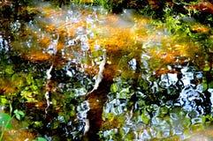 Riflessione del fiume Immagine Stock