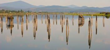Riflessione del fiume di Pend Orielle Fotografia Stock Libera da Diritti