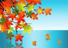 Riflessione del foglio di autunno in acqua Fotografia Stock