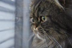 Riflessione del gatto sulla finestra Fotografia Stock Libera da Diritti