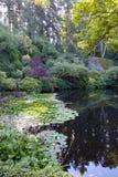 Riflessione del giardino Immagine Stock