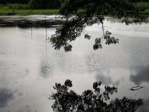 Riflessione del lago in parco naturale Fotografia Stock Libera da Diritti