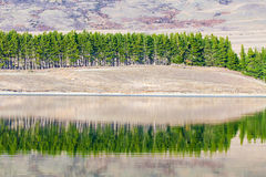 Riflessione del pino con il lago Fotografie Stock