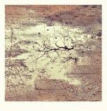 Specchio naturale Immagine Stock