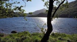 Riflessione del sole nell'acqua nascosta dietro l'albero fotografia stock libera da diritti