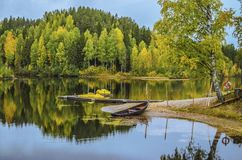 Riflessione dell'acqua dei pini con la foglia gialla sotto il cielo blu fotografie stock libere da diritti