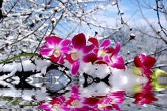 Riflessione dell'acqua e dell'orchidea Fotografie Stock Libere da Diritti