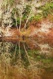 Riflessione dell'albero Fotografia Stock