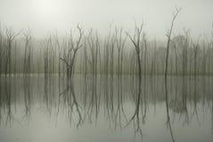 Riflessione dell'albero immagini stock libere da diritti