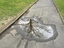 Riflessione dell'albero in acqua immagini stock