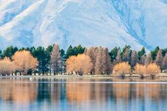 Riflessione dell'albero di autunno con il lago, lago Clearwater, Nuova Zelanda Immagini Stock Libere da Diritti