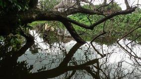 Riflessione dell'albero morto che mette sullo stagno fotografie stock libere da diritti