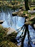 Riflessione dell'albero sul ruscello Fotografia Stock
