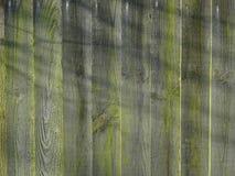 Riflessione dell'albero sul vecchio recinto del giardino Fotografia Stock