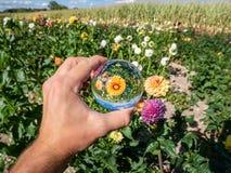 Riflessione dell'ambiente del fiore in una sfera di cristallo di glas immagine stock