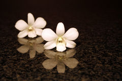 Riflessione dell'orchidea Fotografia Stock