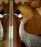 Riflessione dell'uccello Immagini Stock