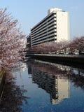 Riflessione della costruzione della città in primavera Fotografie Stock